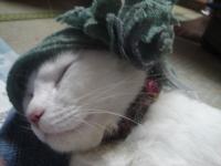 バンダナ猫