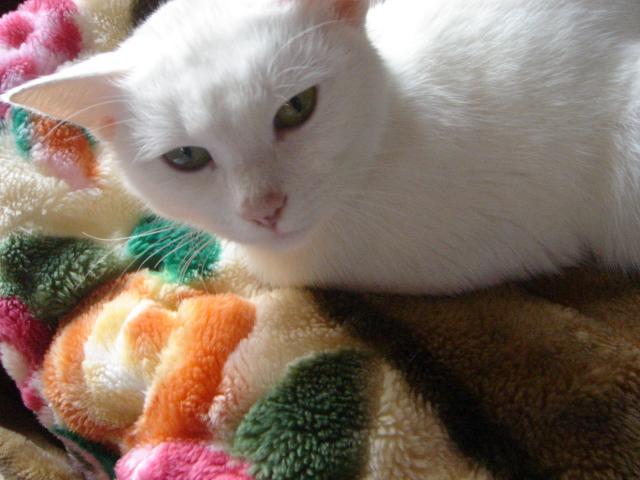 ブログ 白猫みゃーこ