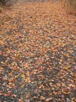 葉もまた落ちる