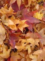 デニムリペア 紅葉