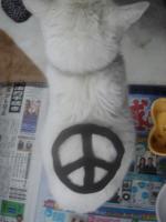 ピースナ猫