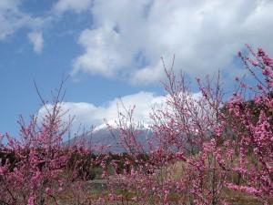 富士山とモモ
