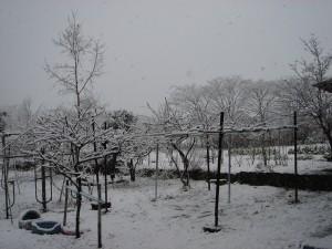 アトリエの雪